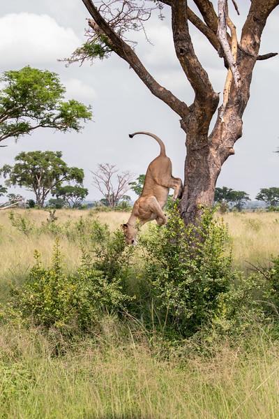 Uganda_T_QE-1546.jpg