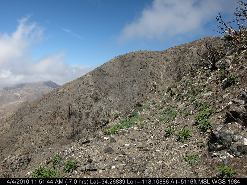 20100404104-Angeles National Forest, Strawberry Peak trail.JPG