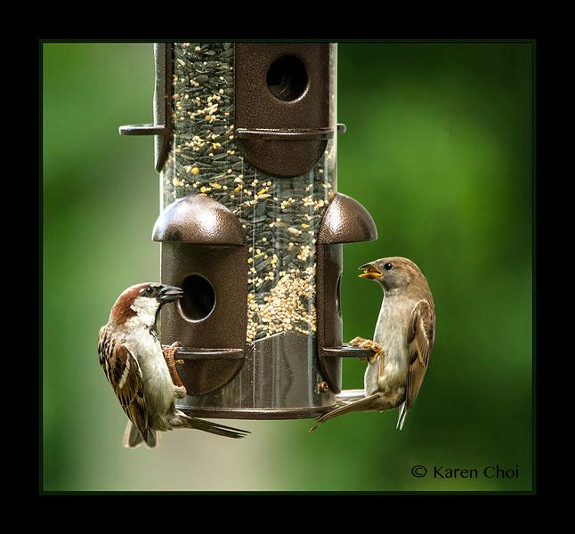 sm 2 birds at feeder.jpg