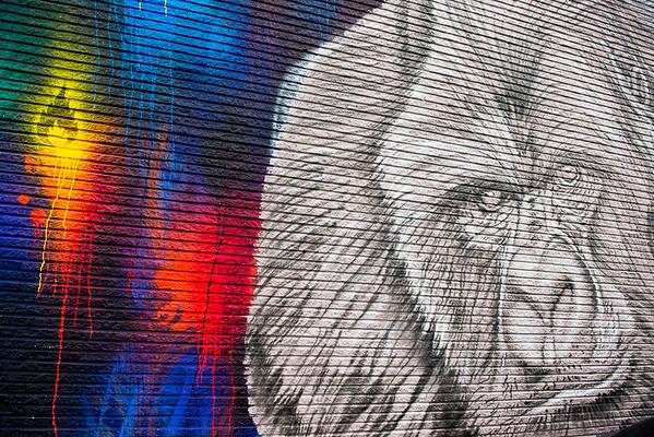 Gorilla Art Murals