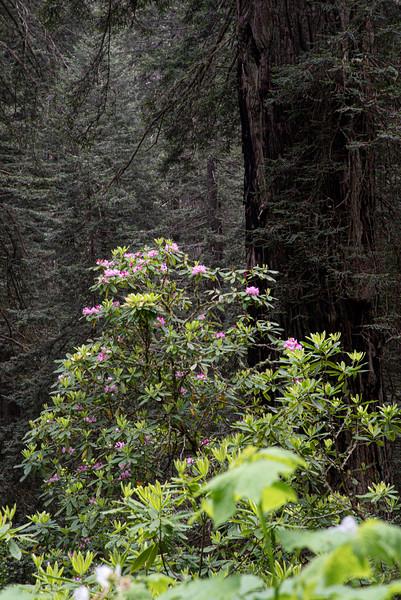 redwoodsFin29-1170.jpg