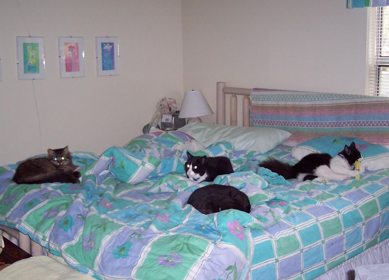There are actually 5 cats in this photo.  I have to make my bed really fast, or it becomes a major chore.