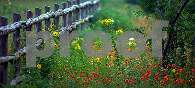 wildflowers-and-blooming-plants-on-full-display-at-texas-state-parks