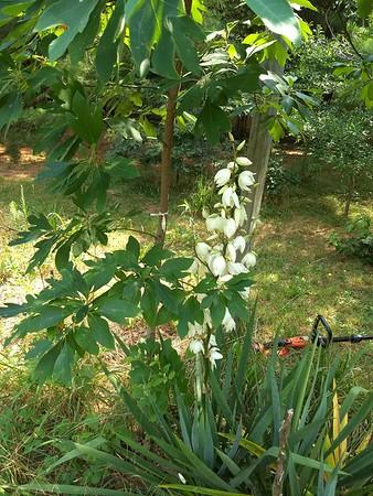 Phone Pix of Garden & Yard