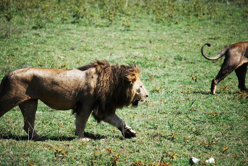 Ngorongoro (155).JPG