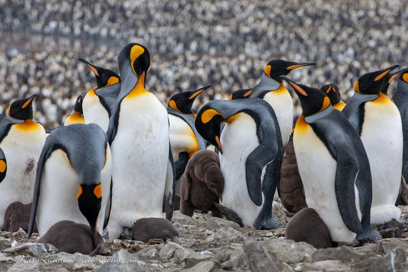 Antarctic-168