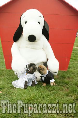 DogFest 2010