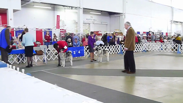 2012-12-09 *SUN* Dallas Dog Show ==VIDEO==