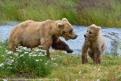 Alaska:  Bears, Eagles & Fish