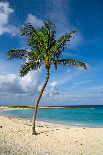 Beautiful palm tree on tropical beach with white sand and clear green water.