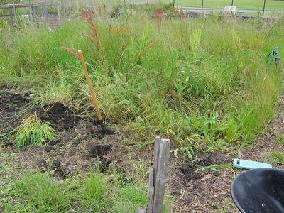Garden 2005