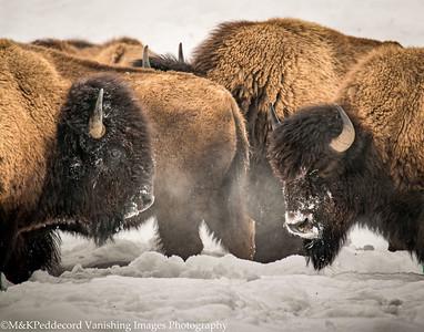 Yellowstone Senic Wonders 2020