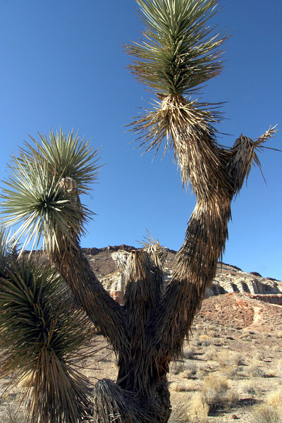 red roc canyon sp 005-2.jpg