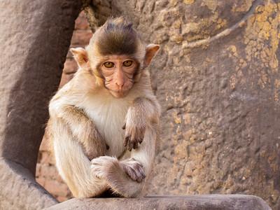 Thailand Monkey Temple