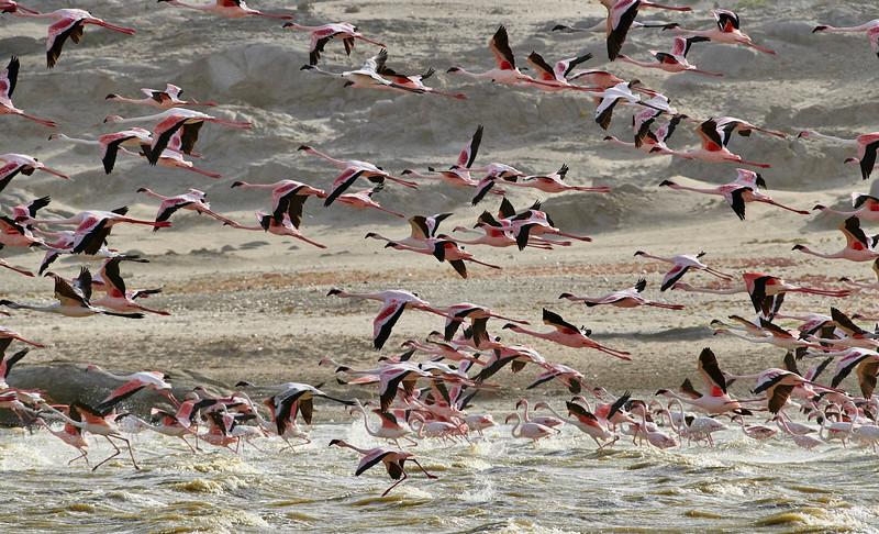DSC_1445 Flamingos.jpg