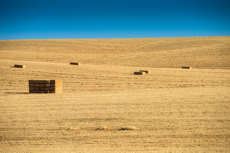 Harvested wheat field, province of Seville, Spain