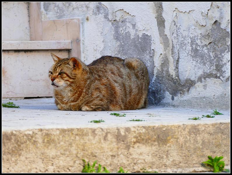 2004-04-Città-Sant'Angelo-117.jpg