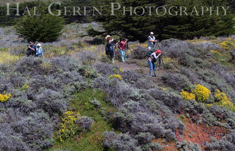 Garrapata Creek Headlands Big Sur, California 1206BS-CP1