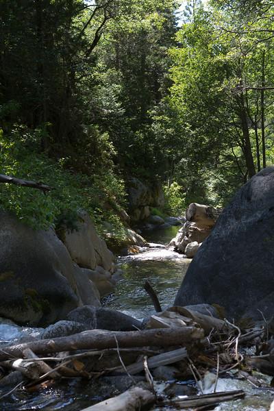 Sequoia_0500.jpg
