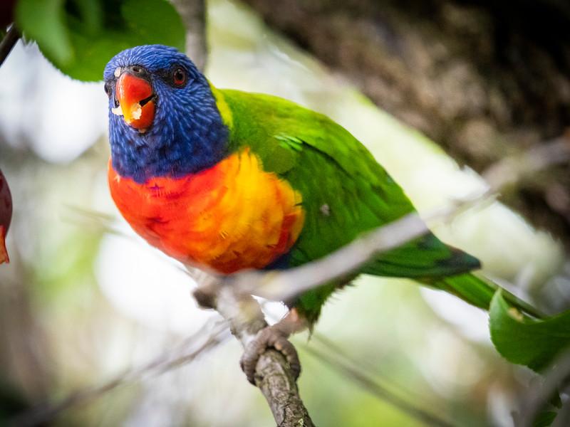 122118  birds  _3.JPG