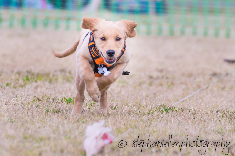 Woofstock_carrollwood_tampa_2018_stephaniellen_photography_MG_8671.jpg