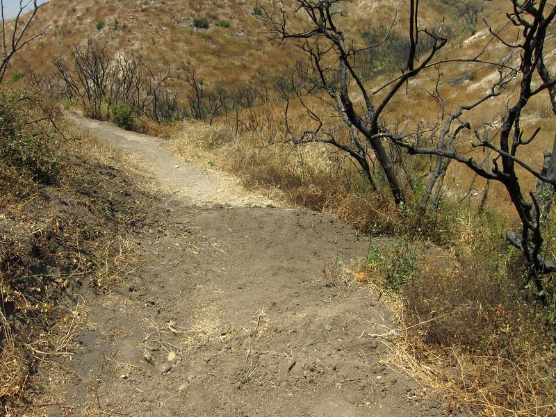 20100710058-Doc Larsen Trailwork CORBA.JPG