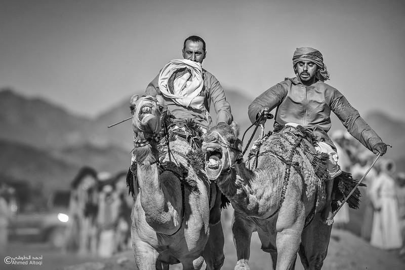 camels- B&W.jpg