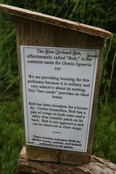 Blue Orchard Bee aka BoB