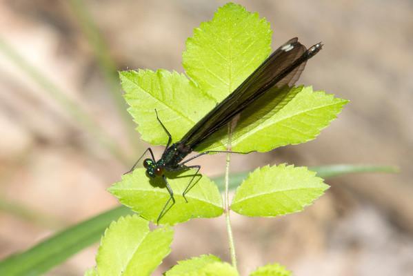 Butterflies, Dragonflies and Damselflies