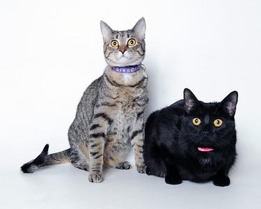 2018 April Cat Gallery