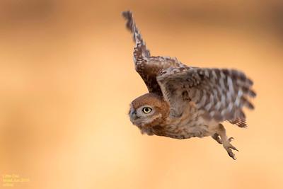 Jun 2015 Little Owls- כוסות