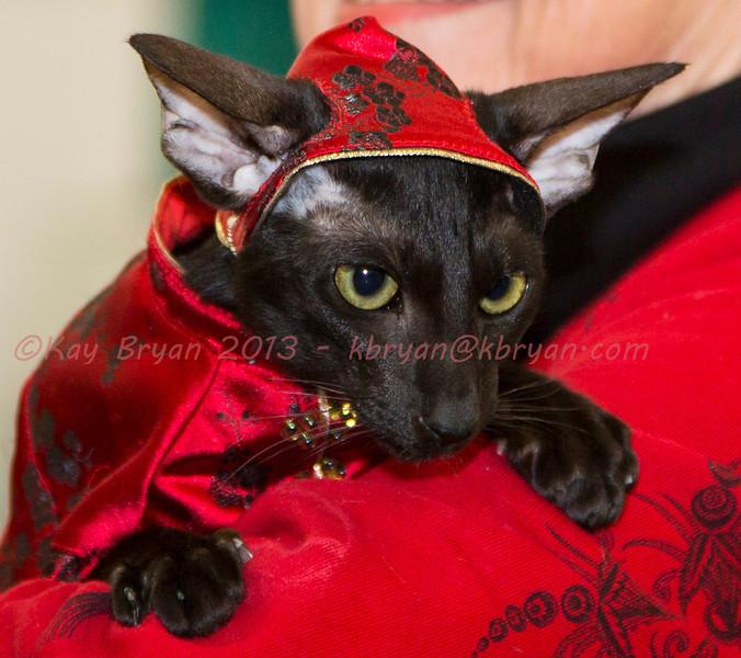 CatShow2014058.JPG