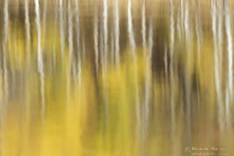 Autumn colours in aspen forest (abstract reflection)