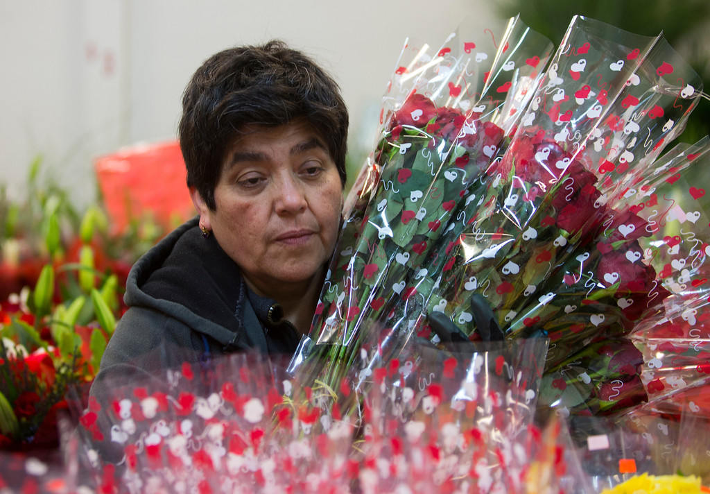 . Lidia Ortiz puts flowers in cool room at Repetto\'s Greenhouse Florist and  in Half Moon Bay, Calif. on Wednesday, Feb. 13, 2013. Repetto\'s expects to be busy on Valentine\'s Day. (John Green/Staff)