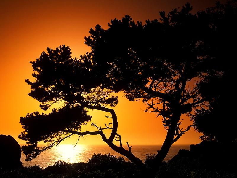 Patrick's Point State Park at Sunset, Near Eureka, California.jpg