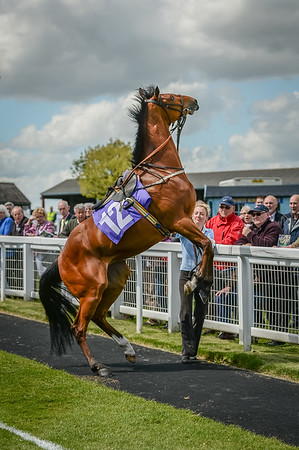 Beverley, Afternoon Racing, 12th May 2015