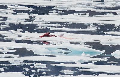 Polar Bear 4 and Kill 6/23