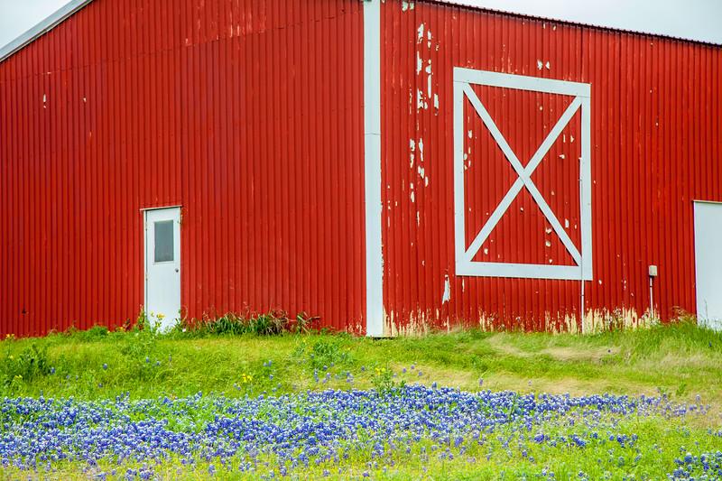2015_4_3 Texas Wildflowers-7516.jpg