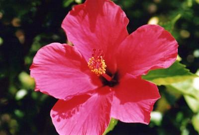 8-23-2003 Deck Flowers