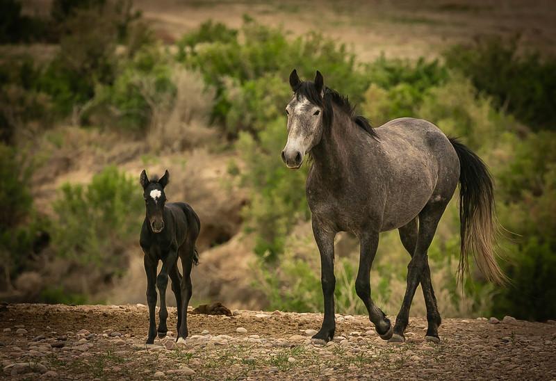 buckskin & colt.jpg