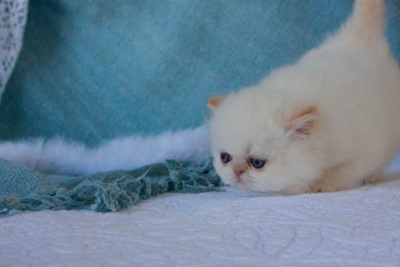 Himi_Kittens_Nov30-8048.jpg