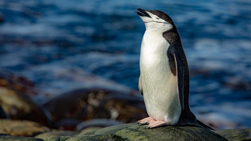 2019_01_Antarktis_06070.jpg