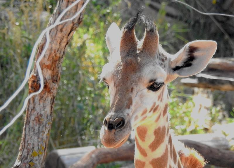 Cheyenne Mtn Zoo 2019 (1110).JPG