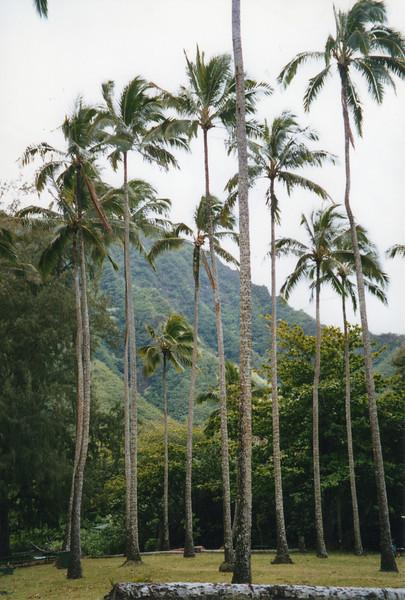 199806-hawaii-11270.jpg