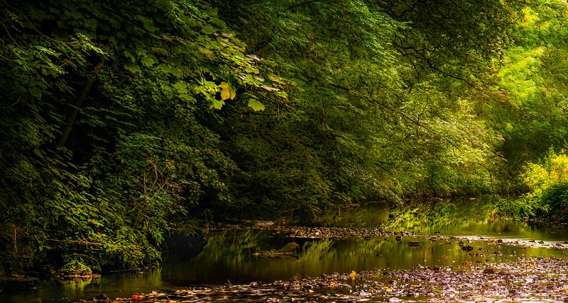 Forest Shadows-069.jpg