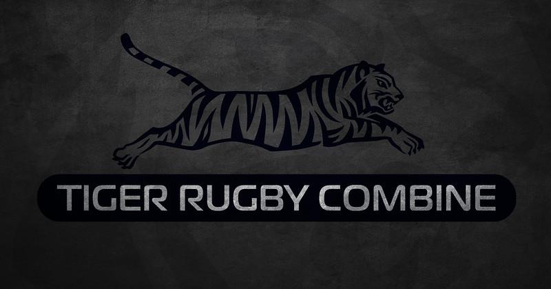 Tiger T C gray.jpg