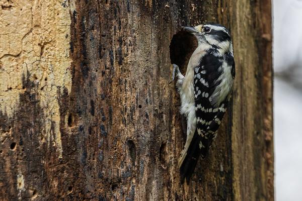 Birds - Various Species
