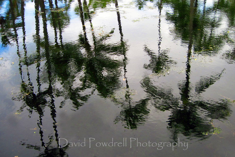 Reflections of palm trees-Hawaii