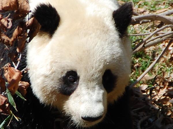 "Washington DC - National Zoo - :""Meet the Bears and the Elephants"" - March 21, 2008 - Nikon D40 - Mark Teicher"