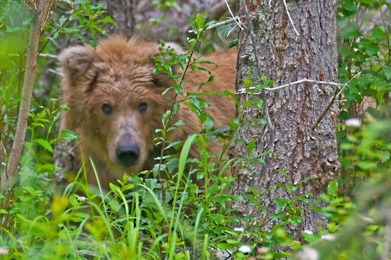 Bear Stare.jpg